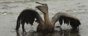 Deepwater Spill