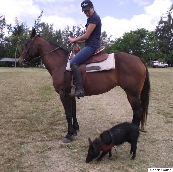 wilma horse pig