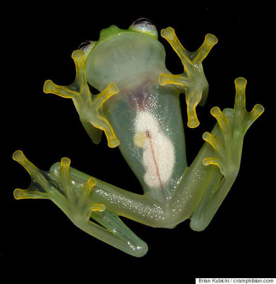 kermit frog 2