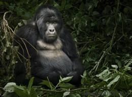 Pour le Jour de la Terre, les 10 merveilles de la nature menacées (PHOTOS)