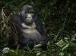 10 merveilles de la nature menacées