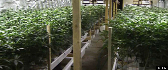 El Monte Marijuana Bust