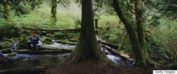 brook stream