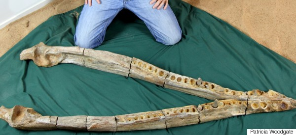 Farmer Finds Prehistoric 'Sea Monster' On His Property