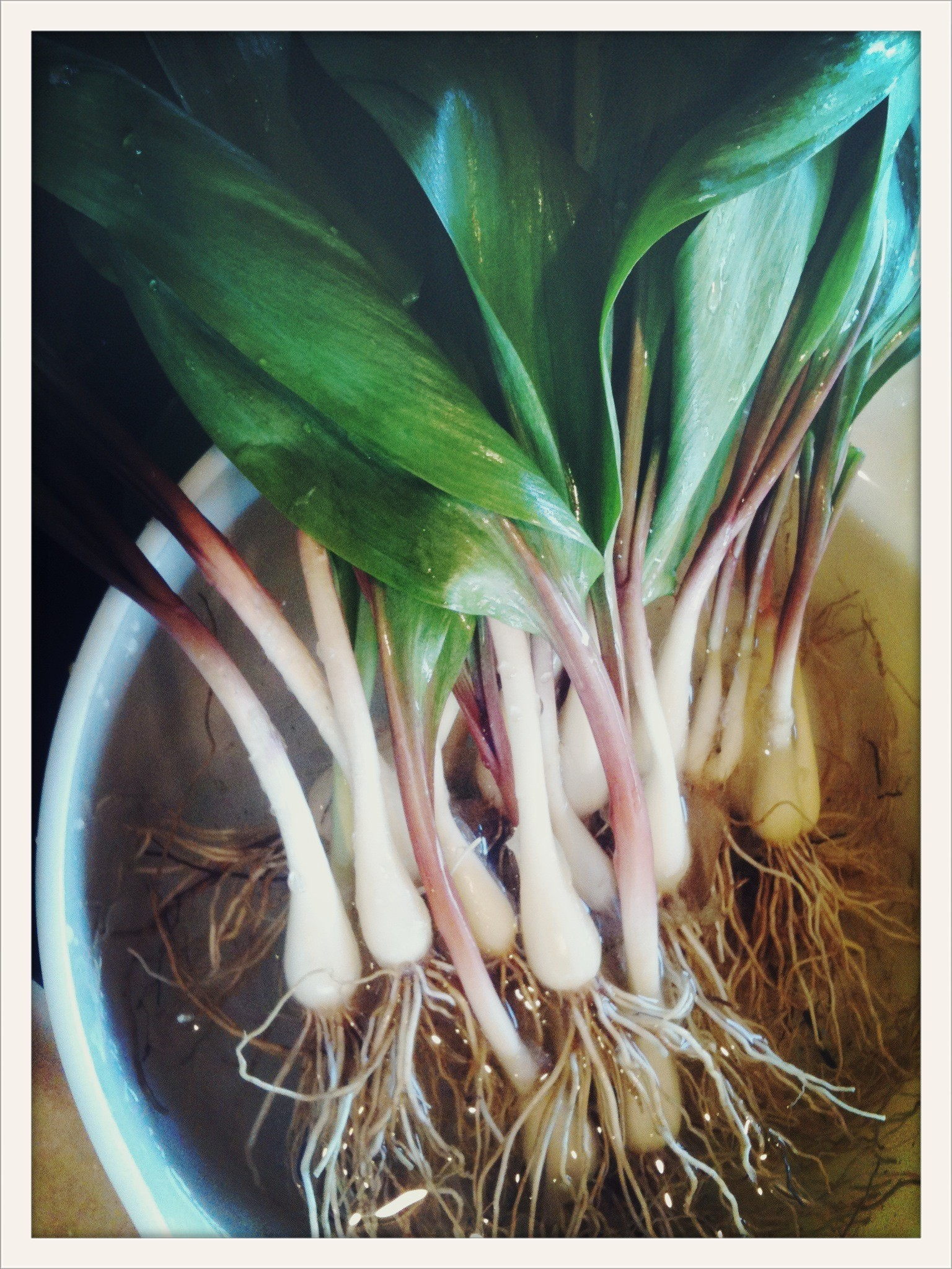what are ramps anyway and why do food lovers freak out over them
