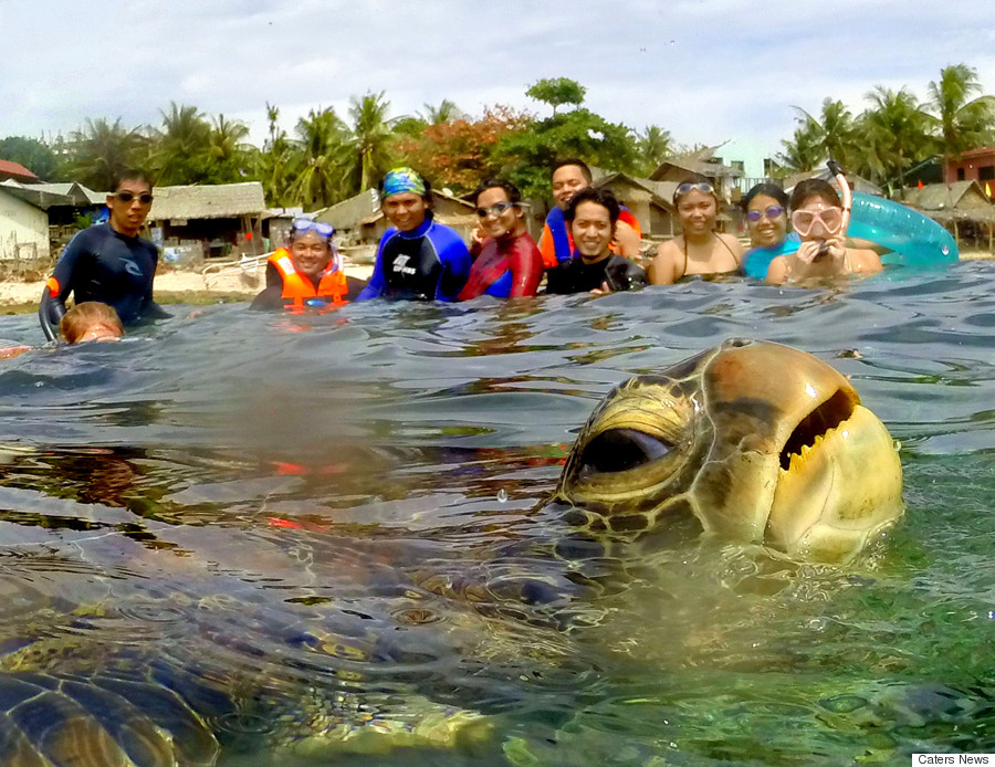 sea turtle photobombing picture
