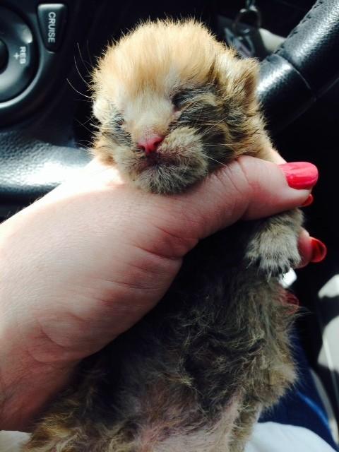 kittenrescued