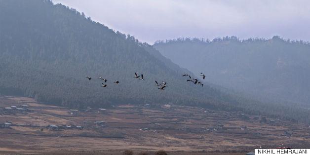 blacknecked cranes_nikhil hemrajani