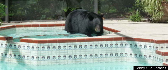 Black Bear Longwood