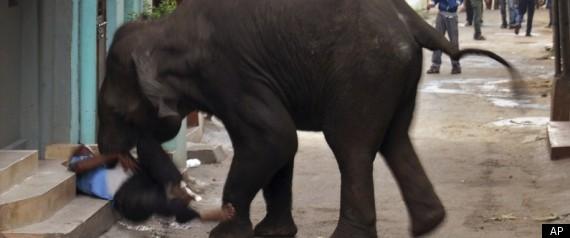 WILD ELEPHANT INDIA