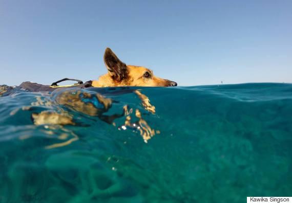 swimmingpup