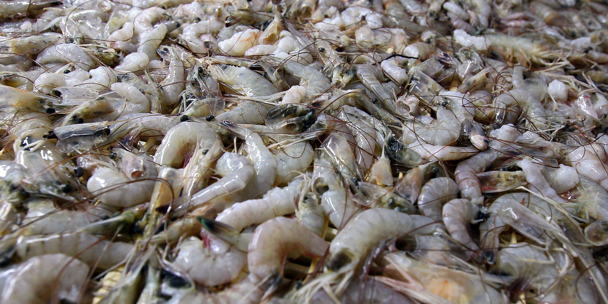 Study Finds Frozen Shrimp Are Totally Disgusting Huffpost