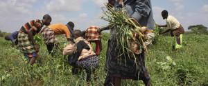 Poverty Farming