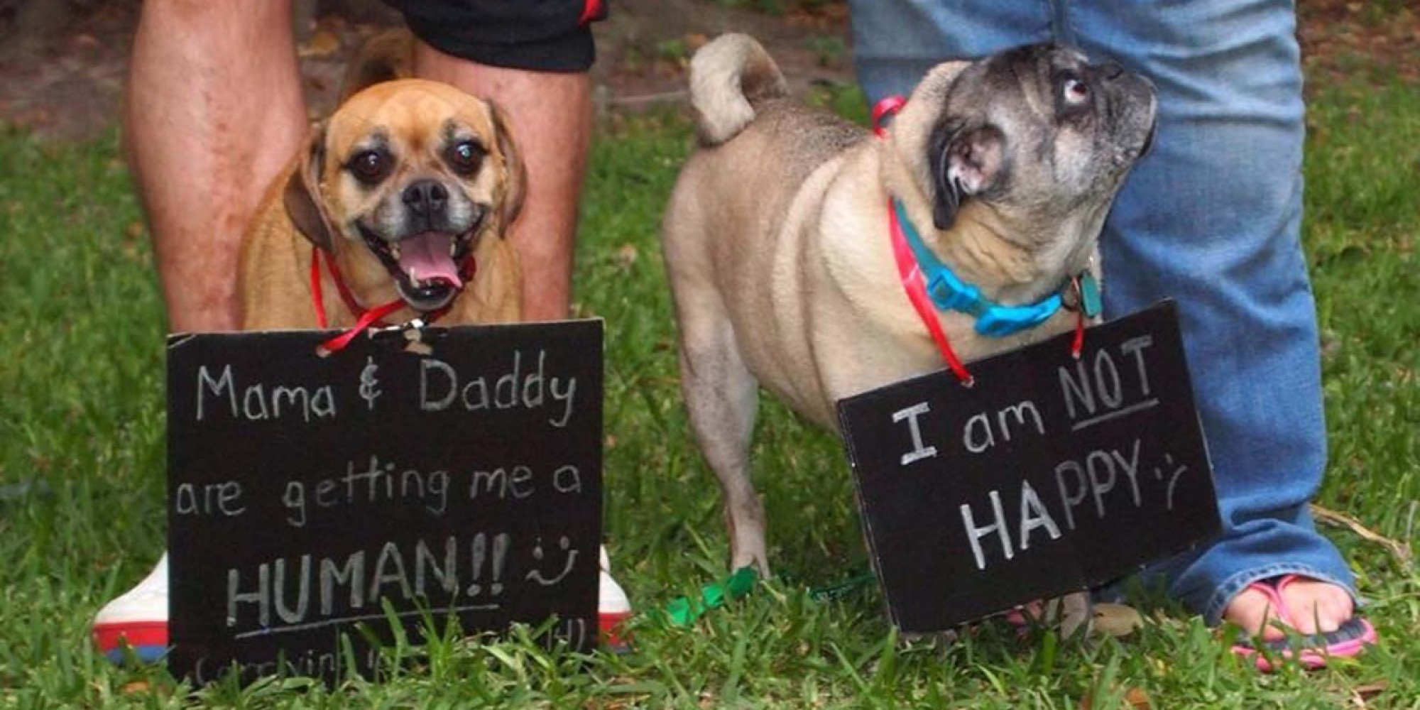 50 Adorable Dogs Who Shared Their Family S Pregnancy News