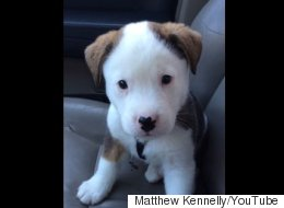 WATCH: Puppy Has Zero Idea Where His Hiccups Are Coming From
