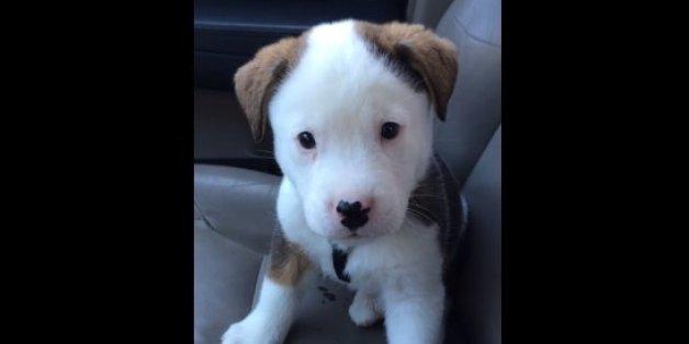 buck puppy