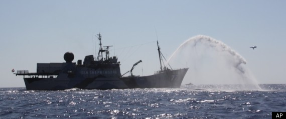 SEA SHEPHERD BATTLE FISHERMEN LIBYA TUNA