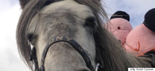 This Pony And His Teddy Bear Are Taking The Welsh Countryside By Storm