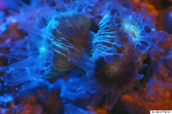 coral night