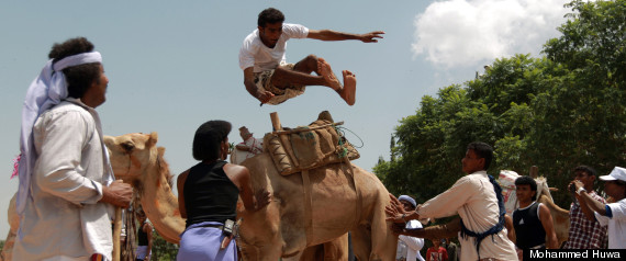 camel jumping yemen