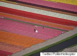 Dutch Police Capture Eye-Popping Photo Of Mystery Newlyweds In A Tulip Field