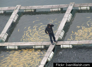 China Fish Farm