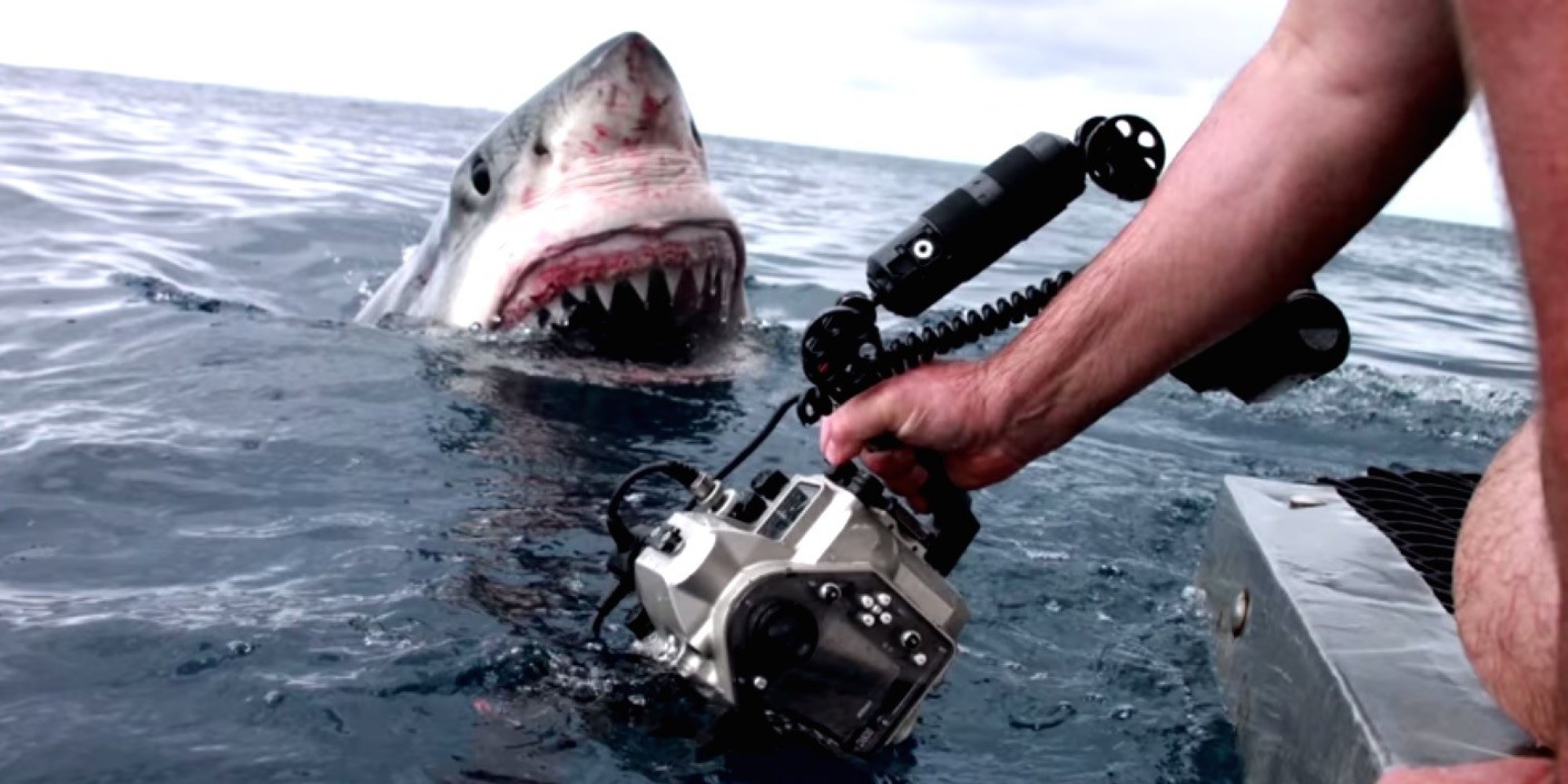NZ Attack Wallpaper: 'Curious' Great White Shark Gets Up Close And Personal