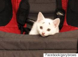 Is 'Concerned Kitten' The New Grumpy Cat?