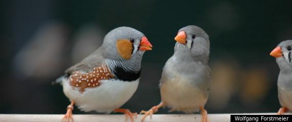 BIRDSEX