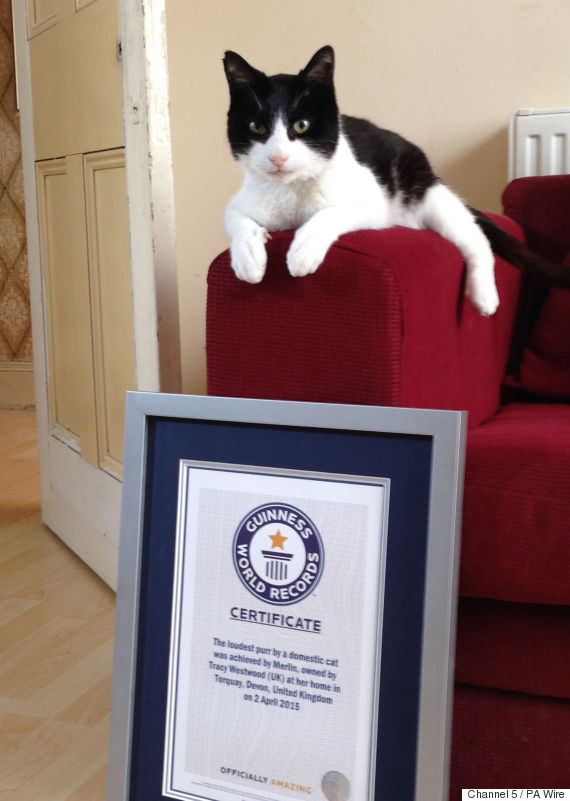 Smallest Cat In The World Guinness L With Decorating. Merlin
