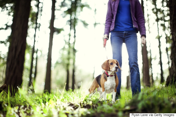 portland walking dog