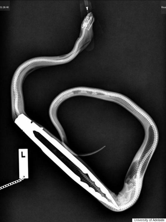 python xray