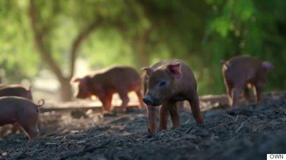 emma the pig