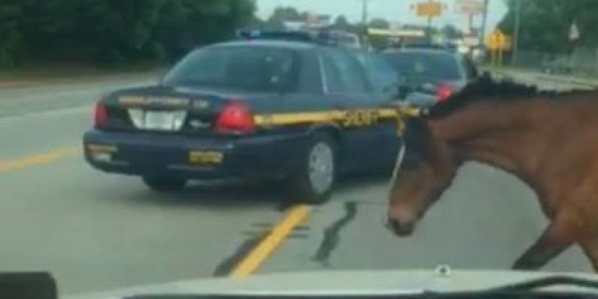 Horse Leads Cops On Hoof Chase Straight To Olive Garden Huffpost