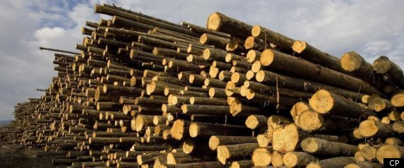 The Forest Products Industry