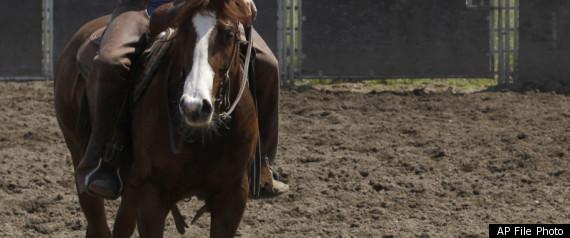 HORSE HERPES VIRUS