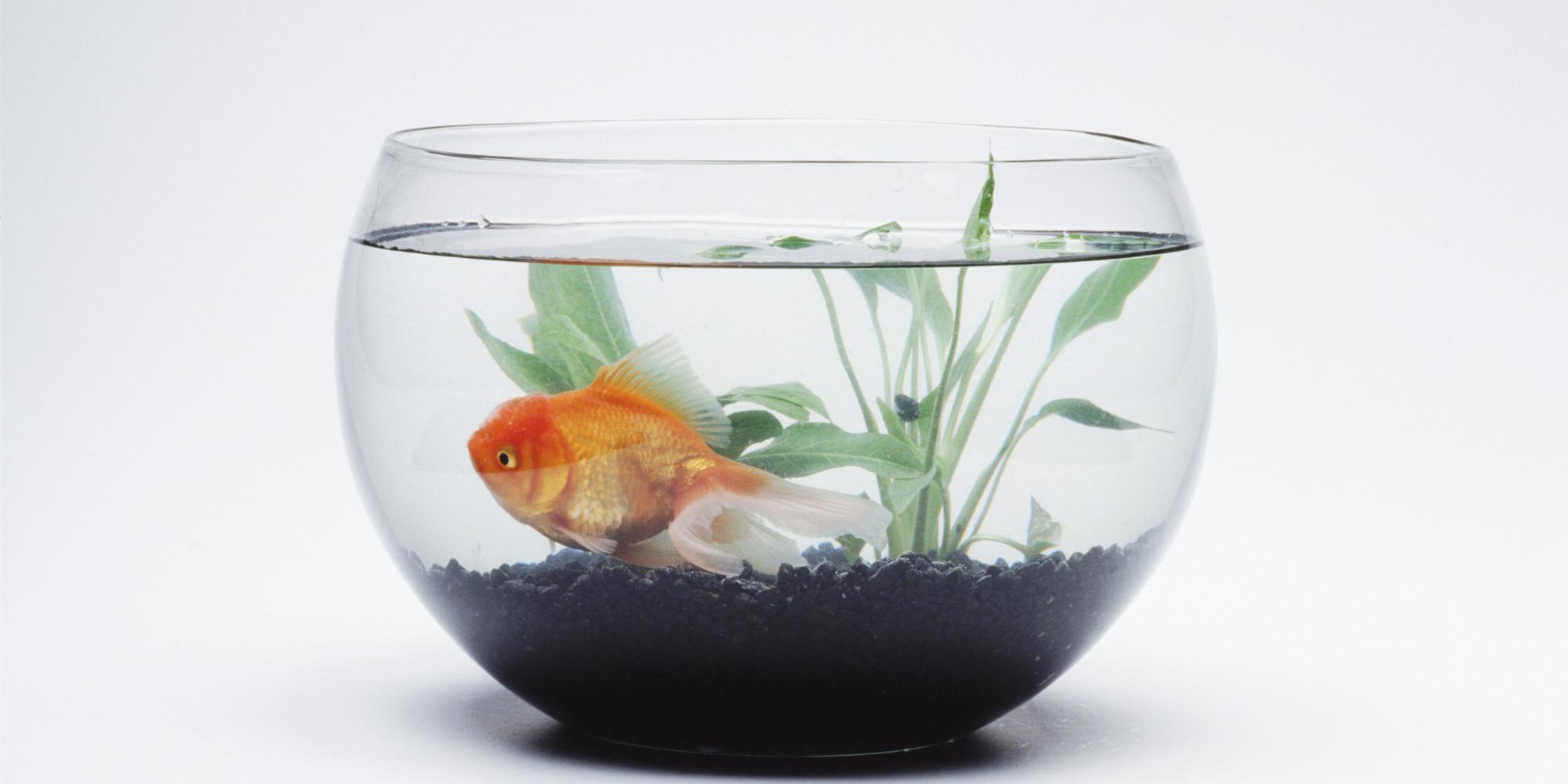 Un smartphone en main votre temps de concentration est for Plante bocal poisson rouge