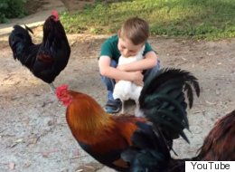 This Is The Best Video Of A Boy And A Chicken That You'll See Today