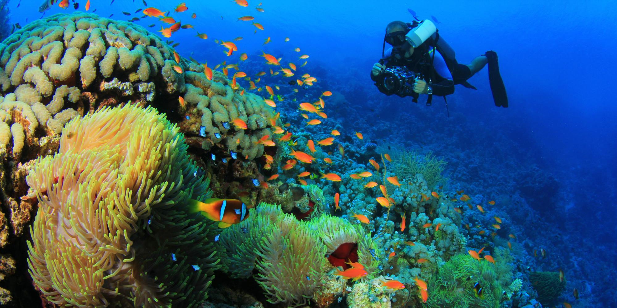 Image Gallery marine w...