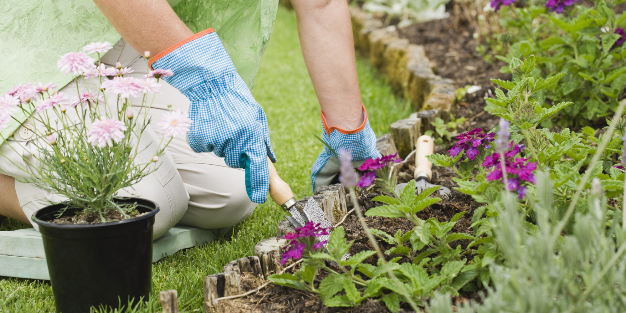 How Dementia Patients Benefit From Gardening | AlzLIVE on Gardening  id=19858