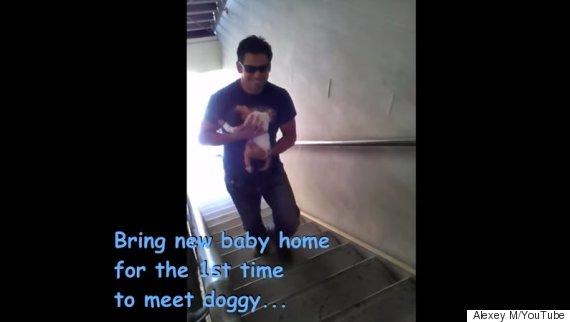 bbay dog meet