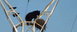 BEAR TRANSMISSION TOWER
