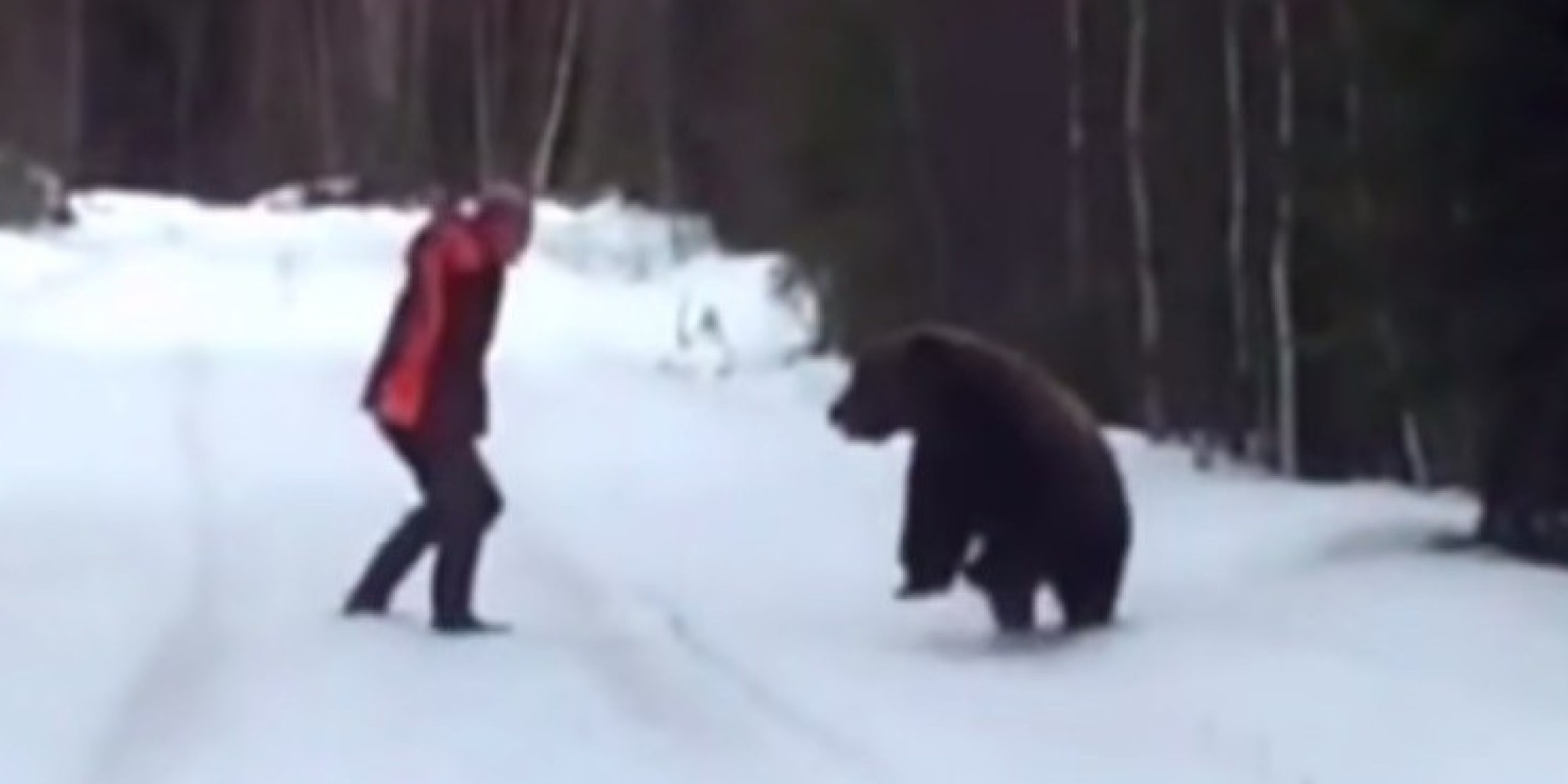 Image result for Swedish man scares the living shit out of an attacking bear
