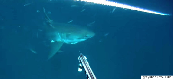 Great White Emerges From Murk, Swims Straight At Terrified Diver