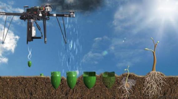drone árvores