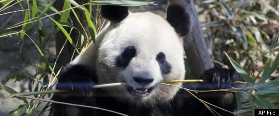 PANDA CENSUS CHINA 2011