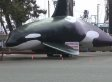 Town Using Huge Fake Whale To Try And Scare Sea Lions From Harbor