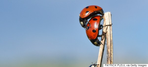 Senior Prank Fills School Hallways With Ladybugs