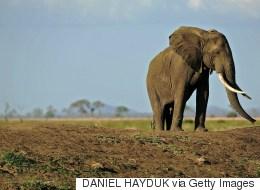 http://i.huffpost.com/gen/2996572/images/s-ELEPHANT-POACHING-large.jpg