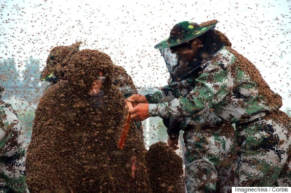3937fcf307d Man Wears Suit Made Of 1.1 Million Bees In Attempt To Set World ...